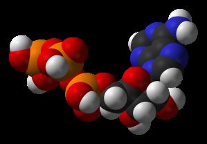 ATP-metabolism